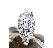 Keep Watching the Skies - Snowy Owl Photographic Print