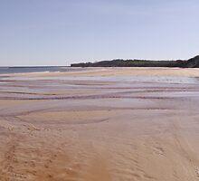 The beach by Lyn Green