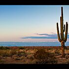 A Single Saguaro  by Saija  Lehtonen