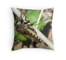 Robber Fly - Promachus rufipes Throw Pillow