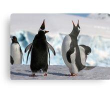 Gentoo penguins (Pygoscelis papua). Antarctica Metal Print