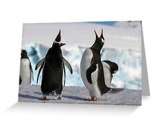 Gentoo penguins (Pygoscelis papua). Antarctica Greeting Card