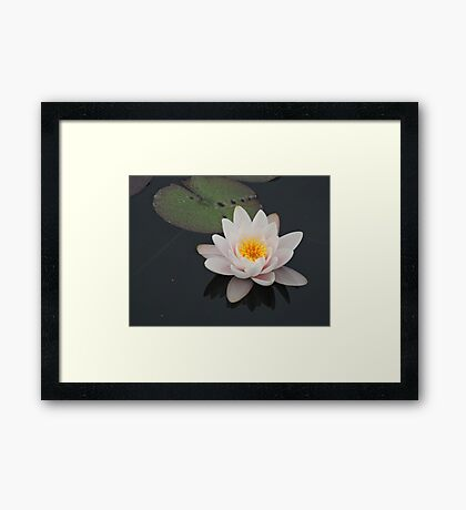 Peaceful Waterlily Framed Print