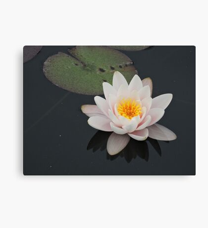 Peaceful Waterlily Canvas Print