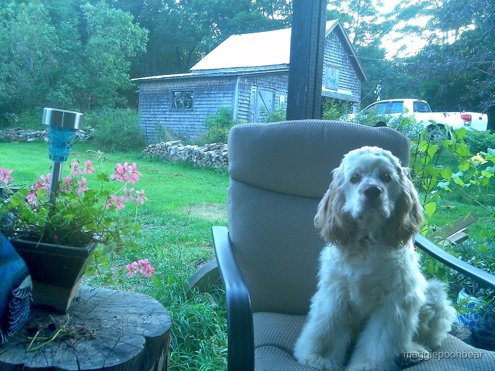 Puppy Duncan by maggiepoohbear