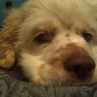 Duncan puppy by maggiepoohbear