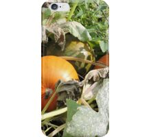 Cinderella's Garden iPhone Case/Skin