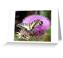 Long tale butterfly on wild thisle Greeting Card