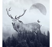deer autumn Photographic Print