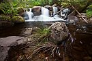 Fuscus Falls by Travis Easton