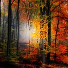 Light Colors by Philippe Sainte-Laudy