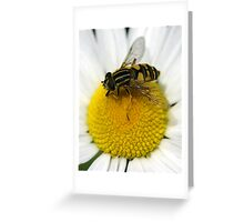 Hoverfly. Greeting Card