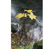 Edge of the Stream Photographic Print