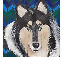 Rough-Haired Collie Photographic Print