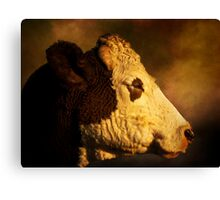 Cows Head Canvas Print