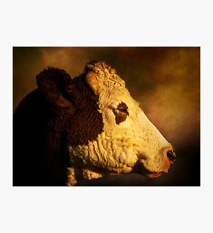 Cows Head Photographic Print