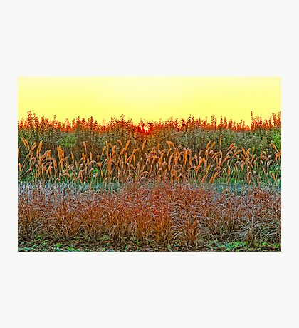 A FROSTY DECEMBER MORNING Photographic Print