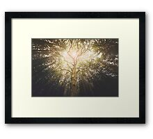 I found a tree in the forest Framed Print