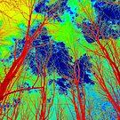 Red Trees by David Schroeder
