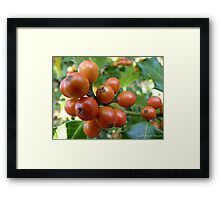 Holly berries Framed Print