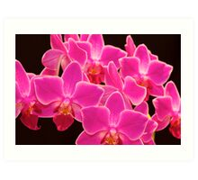 Pink Orchid Art Print