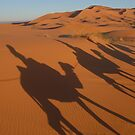 Erg Chebbi, Morroco by Alisdair Gurney