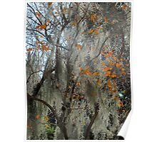 Crepe myrtle & Spanish moss Poster