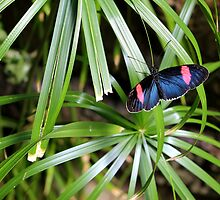 Butterfly on plant by tdash