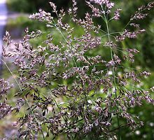 Sparkly Grasses Found In The Wild by Sandra Foster