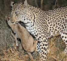 Leopard/duiker interaction 4 by jozi1