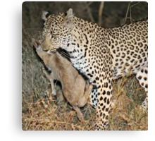 Leopard/duiker interaction 4 Canvas Print