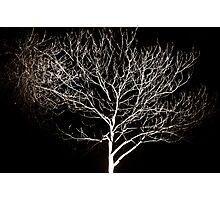 Ivory Limbs Photographic Print
