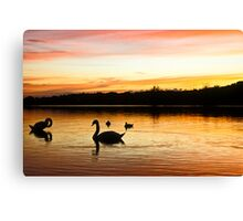 Bathing Swan silhouettes Canvas Print