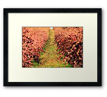 Winter Grape Vines Framed Print