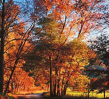 SPARKS LANE,AUTUMN EVENING by Chuck Wickham