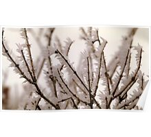 Rime Ice on Plum Branches Poster