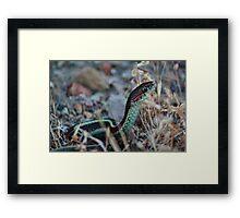 slither Framed Print
