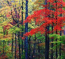 RED MAPLE,LITTLE RIVER ROAD by Chuck Wickham