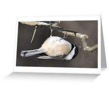 Upside down Black Capped Chickadee Greeting Card