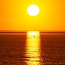 """Dolphin Sunset"" Shark Bay, Western Australia by wildimagenation"