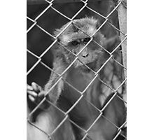 Caged Body & Mind Photographic Print