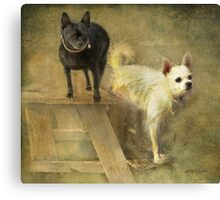 Happiness Is My Chihuahua Girlz Canvas Print