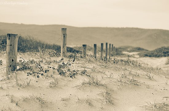 Birdie Beach in winter by Sherilyn Hawley