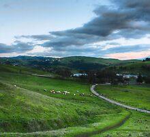meadows by thepaegan