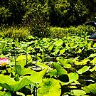 Fly my pretty, Adelaide Botanic Gardens by Elana Bailey