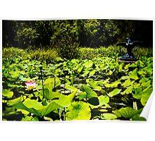 Fly my pretty, Adelaide Botanic Gardens Poster