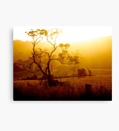 Golden Rays flowing from the Tasmanian Sun Canvas Print