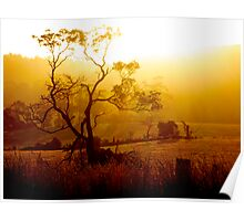 Golden Rays flowing from the Tasmanian Sun Poster