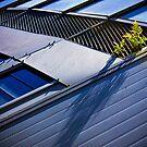 I want to break free, Adelaide Botanic Gardens by Elana Bailey