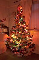 My Christmas Tree  by AnnDixon